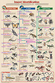 Insect Identifcation Chart