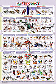Arthropods Poster